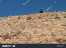 dry grass field background. Dry Grass Field And Human Figure In Back Position On The Background, Outdoor , Serenity Background O