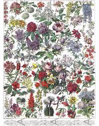 French Antique Botanical Print Flowers Chart Larousse Dictionary Plate Vintage Flowers Illustration Digital Garden Download