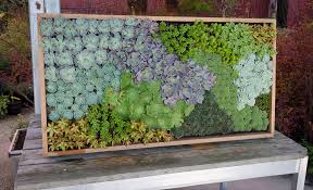 succulent art on live succulent wall art with succulent art a photo on flickriver