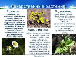 Разнообразие растений класс презентация к уроку Окружающий мир слайда 22 Лекарственные растения РомашкаПрименяют как противовоспалительное слабое Ромаш