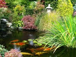 prevent algae in your backyard pond