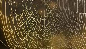 Spider Web Pattern Interesting How To Identify A Spider By Web Pattern Animals Momme