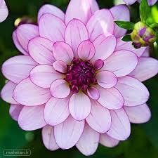 نتیجه تصویری برای گل های زیبا