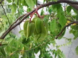 Itu0027s Time We Stop Comparing Womenu0027s Body Shapes To Fruit U2014 QuartzFruit Tree Shapes