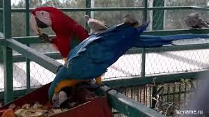 <b>Попугай Ара</b> - YouTube