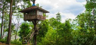 Pete Nelson Reached For His Dreams And Landed Among The Trees Treehouse Builder Pete Nelson