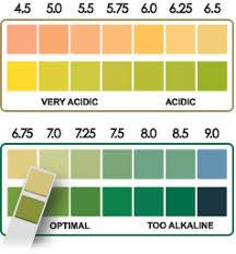 Diagnostic Ph Test Strips 90 Count