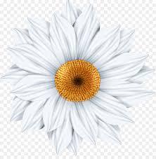 common daisy photography art clip art daisy