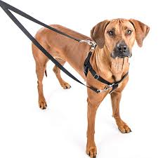 2 Hounds Design 2 Hounds Freedom No Pull Dog Harness Training Package Velvet Padding Multi Function Usa Made Leash Included Medium 5 8 Wide Green