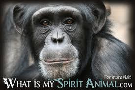 Monkey Quotes Sayings What Is My Spirit Animal Spirit Totem