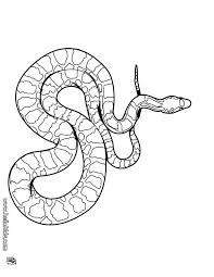 Small Picture 11 best SNAKES EWWWWWWWWWWW images on Pinterest Coloring pages
