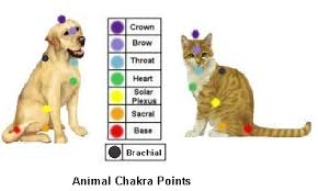 Animal Chakra Chart Animals Chakra Points And Energy Healing