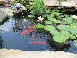 care feeding of pond fish