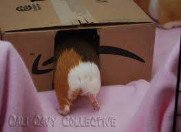 cali cavy collective a blog about all things guinea pig diy guinea pig toy cardboard box hideaway