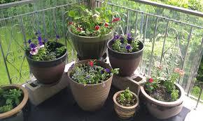 epsom salt gardening. Epsom Salt For Garden Gardening
