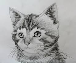 Collection Of Art Animals Drawing Download More Than 30
