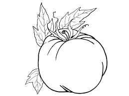 Tranh tô màu] – 17 bức tranh tô màu hình quả Cà chua tuyệt đẹp cho bé gái,  bé trai – Tinh Tinh