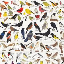 Birds Of North America Cute Birds Birds Beautiful Birds