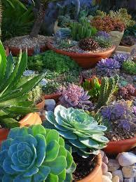 1055 Best Cactus N Succulent Beauty Images On Pinterest  Cactus Succulent Container Garden Plans