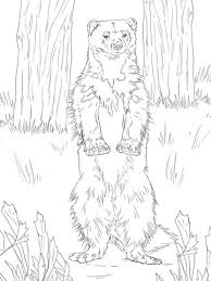 Small Picture Wolverine Standing Up coloring page Free Printable Coloring Pages