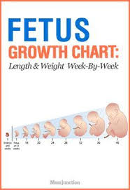 Growth Chart Fetal Length And Weight Week By Week Growth Chart Fetal Length And Weight Week By Week Baby