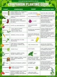 Companion Planting Guide Gaias Organic Gardens