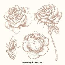 Small Picture Roses Vectors Photos and PSD files Free Download