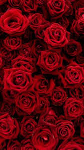 Red Flower Wallpaper Red Rose Wallpaper Awesome Mobile Wallpaper Wallpaper Iphone