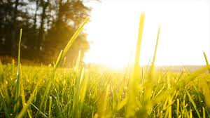 grass field background. Green Grass Field Background. Farming Harvesting Ecology Scene. Vibrant Vivid Stock Video Footage - VideoBlocks Background E