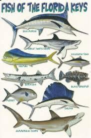 Modern Nouvelle Postcard Fish Of The Florida Keys