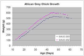 Sauds Aviary Hand Rearing African Grey Chicks