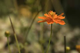 フリー写真画像 花夏の季節自然植物ワイルドフラワー花びら