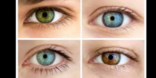 Baby Eye Color Possibility Chart Genetics And Eye Color
