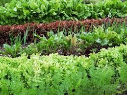 Kitchen Garden Vegetables Preparing Soil And Yard For Planting A Vegetable Garden Hgtv