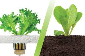 hydroponics what method grows the best plants