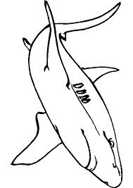 Dessins Colorier Coloriage Requin Imprimer