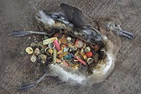 Resultado de imagem para plastico en el mar