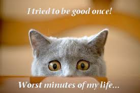 Image result for funny pics about life