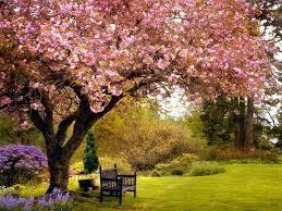 spring nature backgrounds. Desktop Wallpaper Spring 187 Best Plants Wp S Images On Pinterest Of Nature Backgrounds
