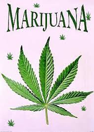 Image result for marijuana leaf