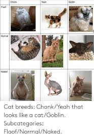 Chonk Chart For Cats Chonk Yeah Goblin Floof Normal Naked Cat Breeds Chonkyeah