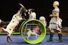words sample essay on a visit to a circus for kids children   words sample essay on a visit to a circus for kids children and school students