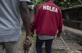 Image result for images of The National Drug Law Enforcement Agency (NDLEA)