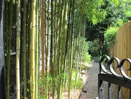 Small Picture Live Live Bamboo Garden Fence Bamboo Fence Design And Ideas Of