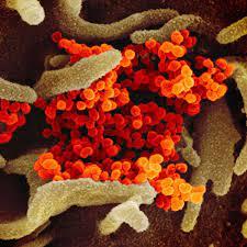 Corona-Mutante Delta Plus auch in Deutschland nachgewiesen - Variante  besonders ansteckend