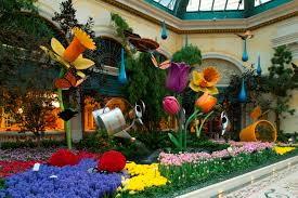 spring showers bring bountiful flowers at bellagio s conservatory botanical gardens