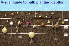Small Picture How to Plant Spring Flowering Bulbs