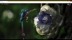 hummingbird by samsung live wallpaper