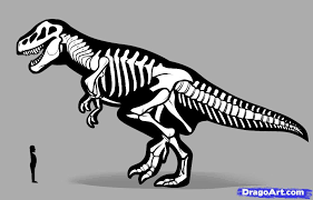 Small Picture Best Photos of Dinosaur Skeleton Drawing How to Draw Dinosaur