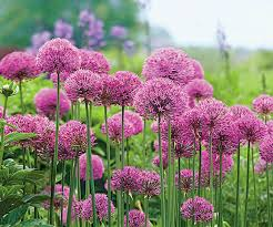 Planting Charts For Spring Flowering Bulbs Better Homes